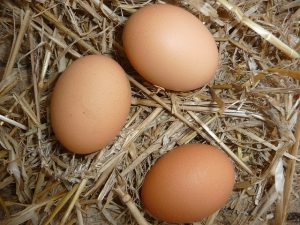 Best Chicken Coops for 4 Chickens - Farm Fresh Eggs!